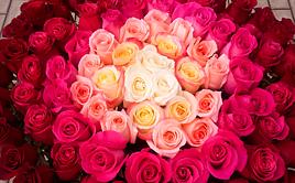 Заказ цветов на соколе, доставка цветов по адресу в нижний новгород круглосуточно
