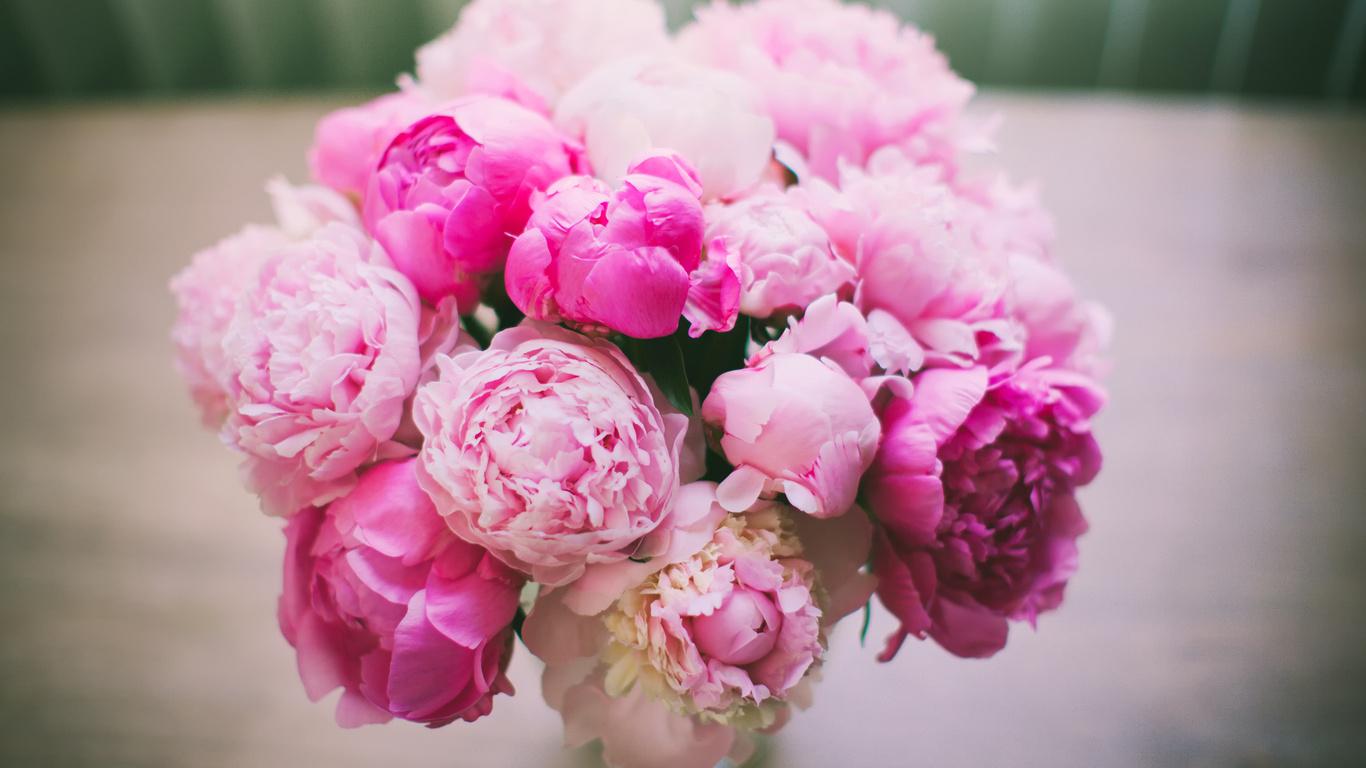 Цветы пионы самые красивые картинки